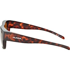 Alpina Overview II P Glasses havana matt/brown mirror